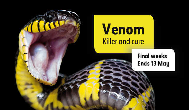 Venom: Killer and Cure. Final weeks, ends 13 May 2018