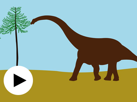 Dinosaur animation
