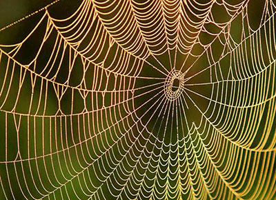 A spider web covered in dew