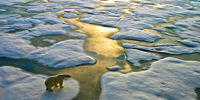 A polar bear surveys a path through the ice