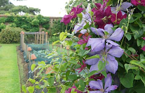 Photo of Kitchen Gardens