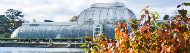 Image of the Palm House in autumn